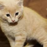 Quieren entrenar empleados con lindos gatitos