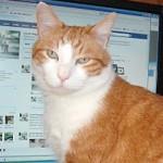 Según un estudio el 10% de perfiles de Facebook son falsos