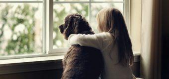 Comida seca vs comida húmeda para mascotas