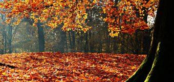 5 motivos para adorar el otoño