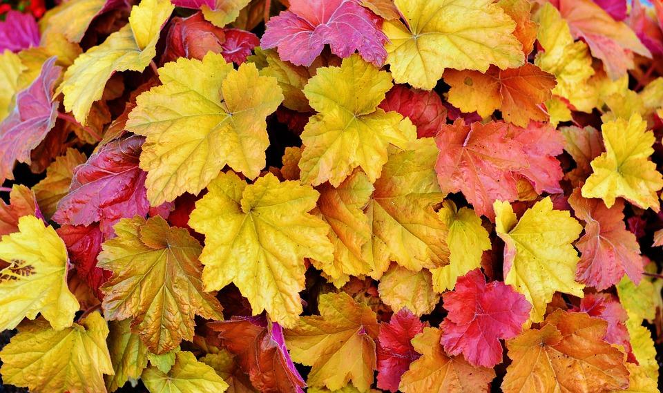 hojas-otoño